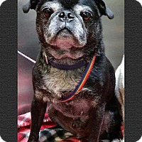 Adopt A Pet :: Kanye - Austin, TX