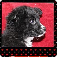 Adopt A Pet :: Eloisa (Pom-Erin) - Harrisonburg, VA