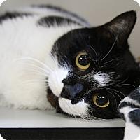 Adopt A Pet :: Maya - Sarasota, FL