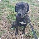 Adopt A Pet :: ELLA MAE