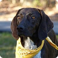 Adopt A Pet :: Wyatt - Mocksville, NC