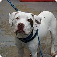 Adopt A Pet :: Tattoo - Aurora, IL