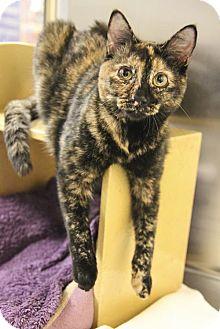 Domestic Shorthair Cat for adoption in Cary, North Carolina - Rose & Rosebud