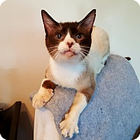 Adopt A Pet :: General Meow - Fairfax, VA