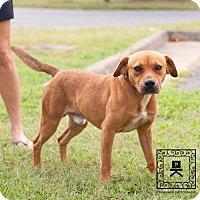 Adopt A Pet :: Spotsylvania Shelter #16-3777 - Fredericksburg, VA