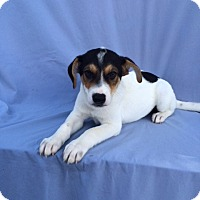 Adopt A Pet :: Peter Parker - East Sparta, OH