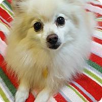 Adopt A Pet :: Princee - Fennville, MI