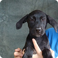 Adopt A Pet :: Ruby - Oviedo, FL