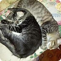 Adopt A Pet :: Yoshi & Raiku - Ravenna, TX