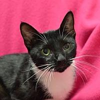 Adopt A Pet :: Celestia161544 - Atlanta, GA