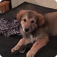 Adopt A Pet :: Elvira - ST LOUIS, MO