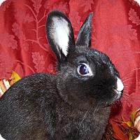 Adopt A Pet :: Gumdrop - Alexandria, VA