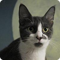 Adopt A Pet :: Gidget - West Des Moines, IA