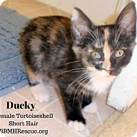 Adopt A Pet :: Ducky - Temecula, CA