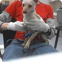 Adopt A Pet :: ALOHA - Conroe, TX