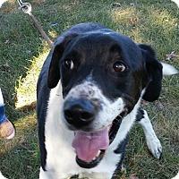 Adopt A Pet :: Kayto - LaGrange, KY
