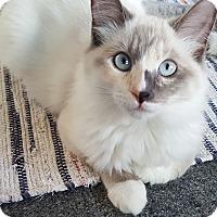 Adopt A Pet :: Amanda - Sherman Oaks, CA