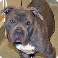 Adopt A Pet :: Skinner - Wildomar, CA