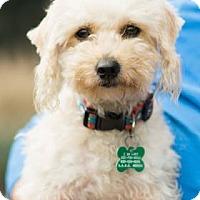Adopt A Pet :: Emmie - Santa Fe, TX