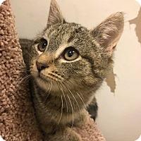 Adopt A Pet :: Jessie - Bensalem, PA