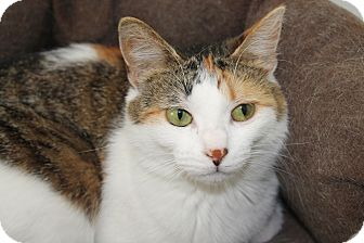Calico Cat for adoption in Kalamazoo, Michigan - Cricket
