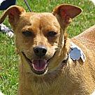 Adopt A Pet :: Jojo