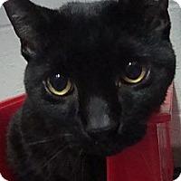 Adopt A Pet :: Princess - Germantown, OH