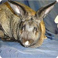 Adopt A Pet :: Pippa - Newport, DE