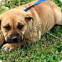 Adopt A Pet :: Dawton - Staunton, VA