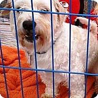 Adopt A Pet :: Frankie - Vista, CA