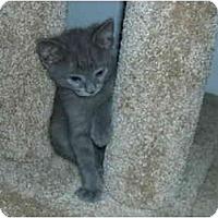 Adopt A Pet :: Baby Boy - Davis, CA