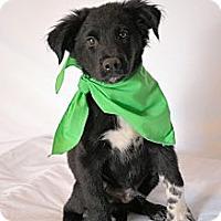Adopt A Pet :: Misha - Aurora, CO