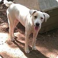 Adopt A Pet :: Kettner ($100 off) - Brattleboro, VT