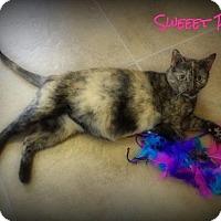 Adopt A Pet :: Sweet Pea - Pekin, IL