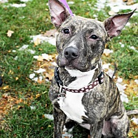 Adopt A Pet :: Milky Way - Detroit, MI