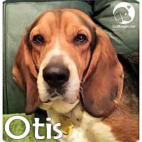Adopt A Pet :: Otis - Novi, MI