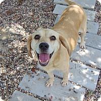 Adopt A Pet :: Marley - Lufkin, TX