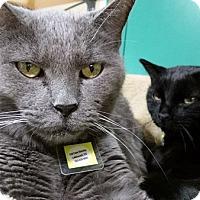 Adopt A Pet :: Bon Soir - Lakewood, CO