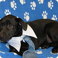 Adopt A Pet :: Reed - Groton, MA
