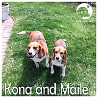 Adopt A Pet :: Kona and Maile - Novi, MI