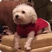 Adopt A Pet :: Kenny - Doylestown, PA
