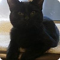 Adopt A Pet :: Kitten 12869 - Parlier, CA
