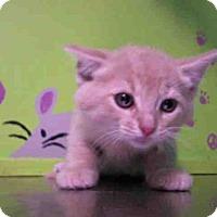 Adopt A Pet :: EDDI - Houston, TX