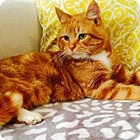Adopt A Pet :: Cheeks - Addison, IL