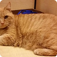 Adopt A Pet :: Montana - North Haven, CT