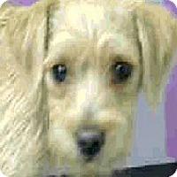 Adopt A Pet :: Ned-Adoption Pending - Boulder, CO
