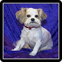 Adopt A Pet :: Dory - San Diego, CA