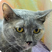 Adopt A Pet :: Blue - Englewood, FL