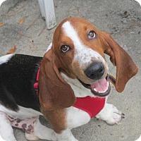 Adopt A Pet :: Fred - Brunswick, ME