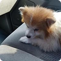 Adopt A Pet :: CHUBBY - Houston, TX